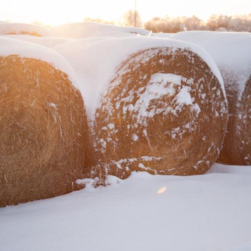 Landwirte_in_Werne_Winter